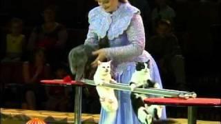 Смотреть онлайн Цирковое выступление умных кошек