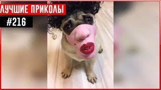 ПРИКОЛЫ 2017 Январь #218 ржака до слез угар прикол - ПРИКОЛЮХА