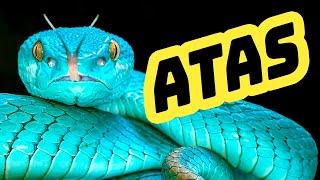ШОК!!! змея укусила на шоу в Таиланде.