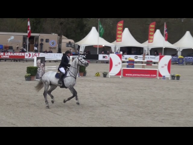 Damline of BWP elite stallion Jaguar van Paemel - 1m50 showjumper