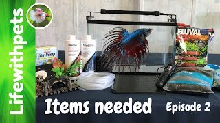 What Items Are Needed For Setting Up A Betta Fish Tank (Episode 2)