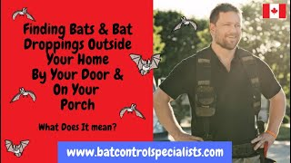 Finding bats and bat-droppings outside your home.