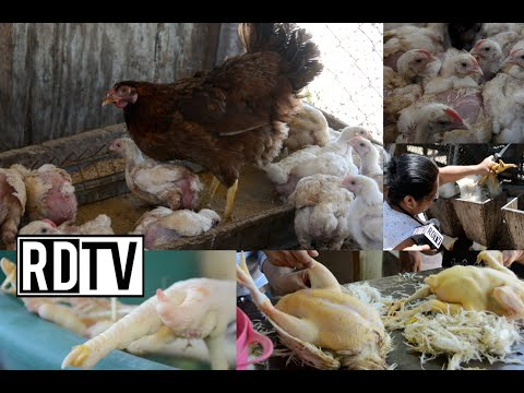 Familias se dedican a la crianza de animales para subsistir
