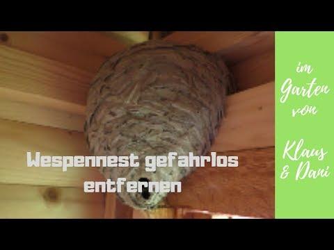 Wespennest gefahrlos im September entfernen ohne die Wespen zu töten