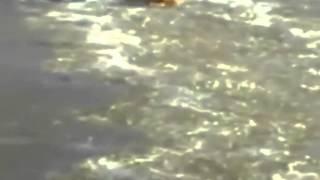Смотреть онлайн Человек прыгнул в замерзшую реку чтобы спасти пса