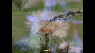 Charlie Landsborough - The Green Hills Are Rolling Still (HQ) + lyrics
