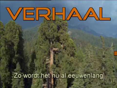 Kinderlied: Ark van Noach