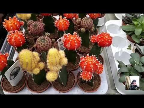 Комнатные цветы в Леруа Мерлен.Обзор цен на комнатные цветы.