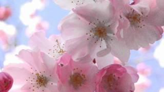 Blooming Flower - Final.wmv