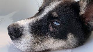 Puppy Has Emergency Vet Visit!