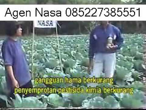 Video BUDIDAYA BROKOLI MAGELANG TEKNOLOGI NASA 085227385551 BB 29A17DB3