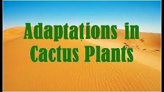 Adaptations : Cactus Plants