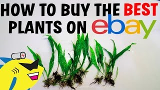 How To Buy The BEST Aquarium Plants Online - EBAY and More