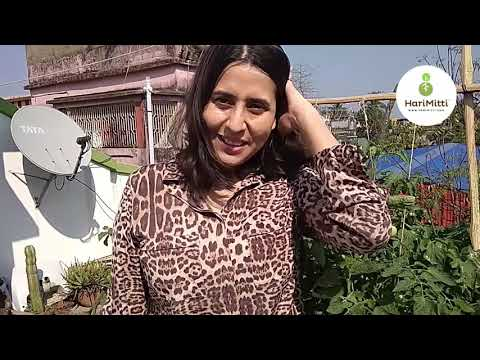 Urban Farming With Mafin Chakraborty at Kolkata | HariMitti