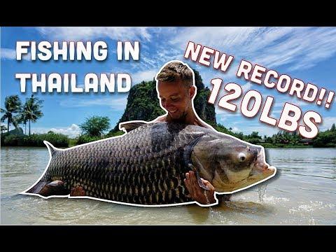 Vissen op SIAMESE KARPER, ARAPAIMA & MEERVAL in Thailand! met DWFishingteam (English subtitels)