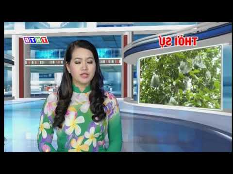 Television (Tien Giang)