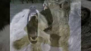 Волчья исповедь.mp4