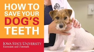 How To Save Your Dogs Teeth