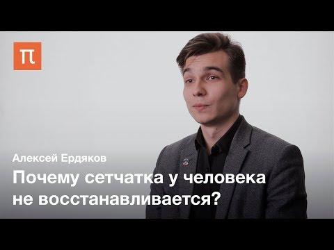Регенерация сетчатки — Алексей Ердяков
