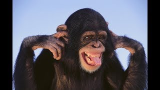 Смешные обезьяны | Лучшая подборка видео приколов с обезьянками (Часть 2)
