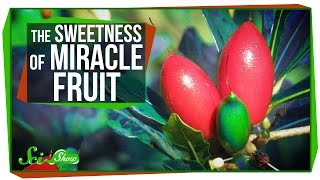 What to taste with miracle fruit