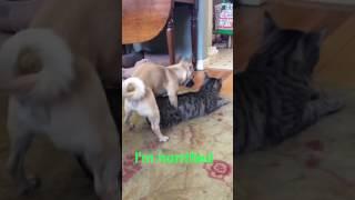 Dog helps cat in heat
