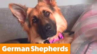 Cute And Funny German Shepherds! | Funny Pet Videos