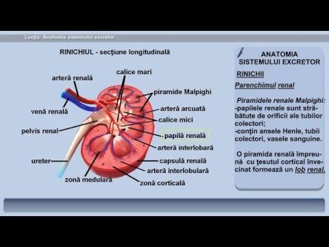 Tratamentul medicamentos al artrozei articulare