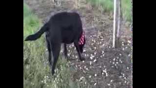 Xenia (Hund) - Vegi-Mirabelen-Day