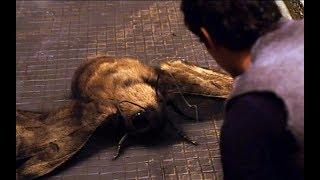 世界末日后,地球毁于一旦人类在地下生活了200年,蛾子长的比人都大,6分钟看奇幻片《微光城市》