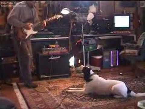 Poldino Blues - Dog singer