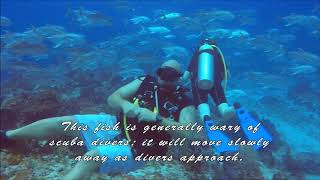 Drift Diving with Horse Eyed Jacks in Cozumel