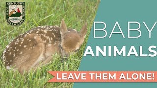 Watch Video - Leave Baby Wildlife Alone