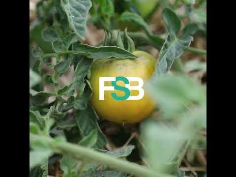 FSB Inside : deux carottes