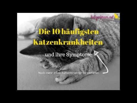 Die Symptome der 10 häufigsten Krankheiten bei Katzen