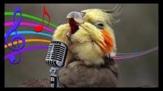 Os Pássaros Mais Engraçados do MUNDO #2