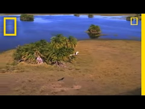 Predators and Prey: Okavango | National
