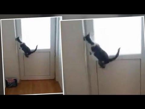 0 超可愛い猫の動画 マケドニアのレオン君 5つのドアを明けて外に出る猫 NHKの世界の動画で紹介