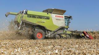 Corn harvest 2018 - Claas Lexion 770 TerraTrac + Gernighoff Horizon Star II 8 rows