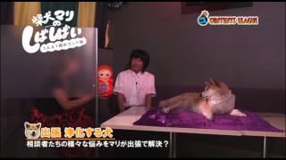 『柴犬マリのしばしばい~1人と1匹のコント集~』トレーラー