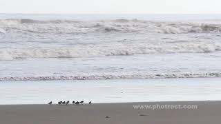 浜辺の動画素材, 4K写真素材