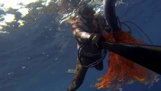 spearfishing small