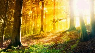2 Hours of Relaxing and Mellow Music | Smooth Jazz Saxophone Songs | Smooth Songs | Soft Jazz