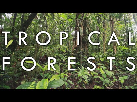 , title : 'Tropical Forests - Biomes#1