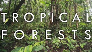 Tropical Forests - Biomes Episode 1