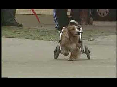 Amazing Dogs on Wheels
