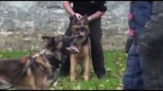 K-9 certification drills in Lancaster County