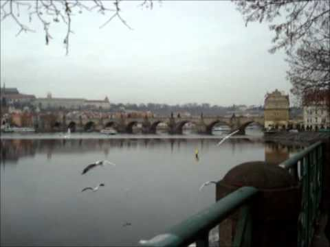 Seagulls in Praha - part 2