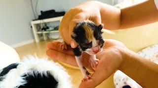 Наша Беременная Кошка РОДИЛА !!! 3 Котенка ! Едем в Больницу делать УКОЛ з