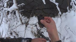 Ловля бобров зимой на капканы